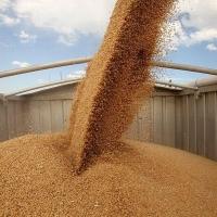 В Омской области простимулируют экспорт зерна
