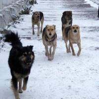 Юного омича на Московке-2 покусали собаки