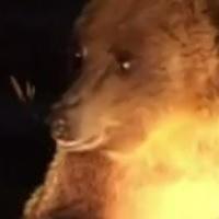 Румынский Брашов атаковали голодные медведи