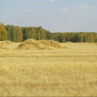 Уборочная кампания в Омской области завершится к 1 октября