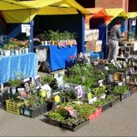 В Омске у «Континента» открылась ярмарка для садоводов