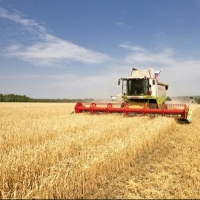 В Омской области объемы собранного урожая превысили прошлогодние показатели