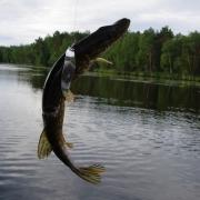Рыболовы-энтузиасты получат «корочки»  внештатных инспекторов
