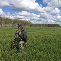 В Омской области ищут отправившегося за шишками 17-летнего подростка