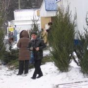 Половина срубленных ёлок в Омске осталась нераспроданной