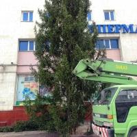 В Омск не могут привезти елку Кокорина