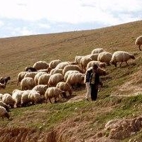 В Тюкалинском районе по горячим следам раскрыто убийство пастуха