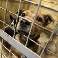 Омское «Спецавтохозяйство» будет размещать в соцсети фото отловленных собак