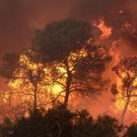 В Усть-Ишиме объявили чрезвычайную ситуацию из-за лесных пожаров
