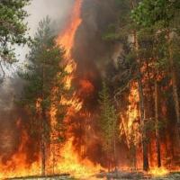 Площадь горящих лесов в Омской области сократилась в два раза