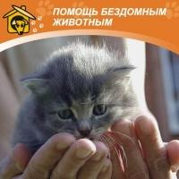 Омская «Будка» нашла бездомным кошкам новых хозяев в Германии