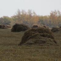 В Полтавском районе незаконно в 200 раз увеличили арендную плату за землю