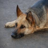 Обещанные к маю вольеры для бездомных собак в Омске не появились