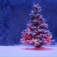Омская елка признана одной из самых высоких в Сибири