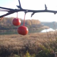 К выходным температура в Омской области начнет понижаться