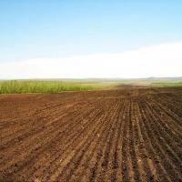 """В омской """"Птичьей гавани"""" засеют поля для ее обитателей"""
