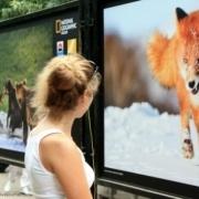 National Geographic откроет в Омске выставку фотографий