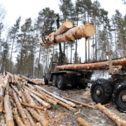 Леспромхоз на севере Омской области незаконно заготовил древесины на 20 миллионов