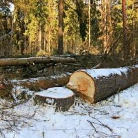 ОНФ подозревает, что к делу «черных лесорубов» в Омской области причастны депутаты и силовики
