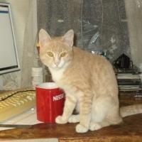 Катавшийся в омской маршрутке кот вернулся к хозяину