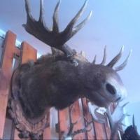 В Омской области задержан охотник-пенсионер за убийство лося