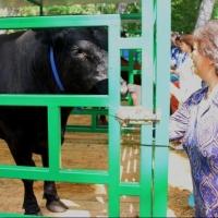 Жительница Большеуковского района Омской области получила грант на создание животноводческой фермы