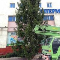 В Омске новогоднюю ель поставили до снега