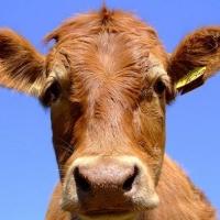 Россельхознадзор порекомендовал запретить ввоз мяса из Казахстана