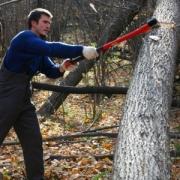Замдиректора Знаменского лесхоза обвиняется в незаконной рубке молодого леса
