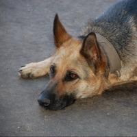 Омичка отсудила 17 тысяч рублей у хозяев злой собаки