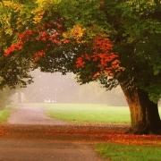 Тысячи новых деревьев вырастут в Прииртышье