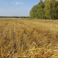 Называевский и Крутинский районы Омской области лидирует в уборочной кампании