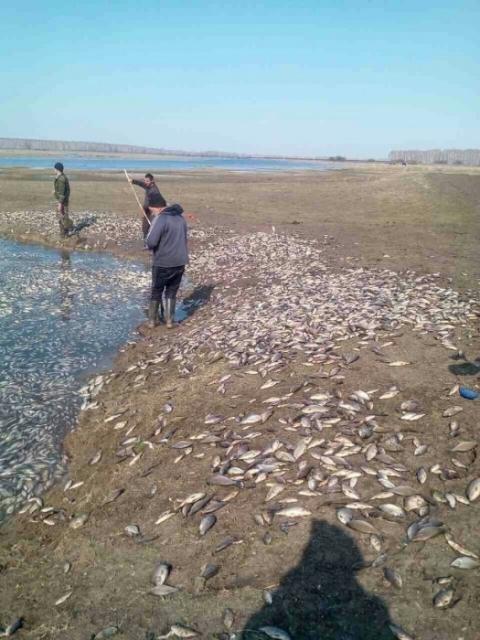 В Минприроды объяснили массовую гибель рыбы на водоемах Омской области