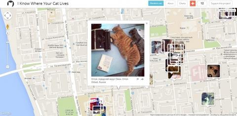 Американец запустил веб-карту мира с фотографиями котов