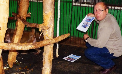 Обезьяна из омского зоопарка предсказала победу Аргентины в футбольном матче
