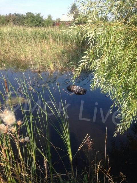 В Лукьяновке нашли труп мужчины в болоте (18+)