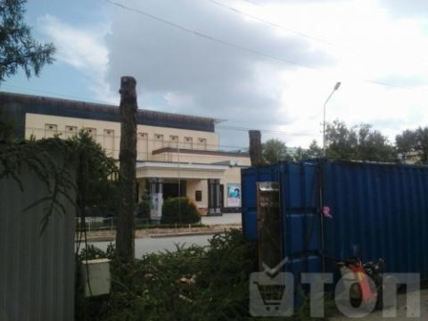 На улице Ленина в Омске начали вырубать деревья
