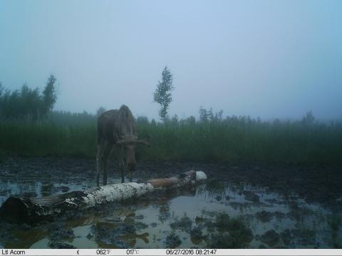 Фотоотчет омского Минприроды о подкормочных мероприятиях