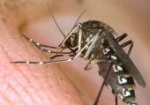 Жильцы пожаловадись на комаров