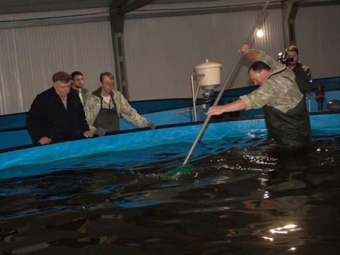 В фонтане на «Агро-Омске» будет плавать живая рыба