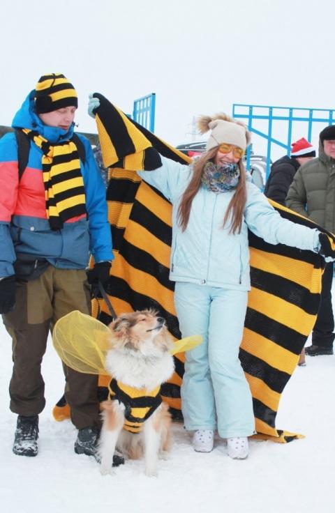 Омские собаководы разрядили собак в желтое