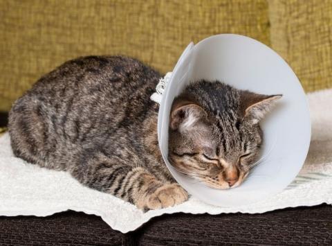 Стерилизация кошек. Выбрать клинику на Petstory