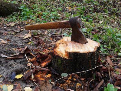 Двум «черным лесорубам» в Омской области огласили наказание