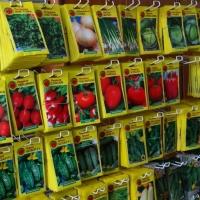 Преимущества покупки семян с помощью интернет магазинов