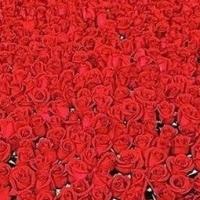 Купить Розы в Москве Дешево или Заказать красивый Букет Роз в интернет-магазине FloraStars.ru
