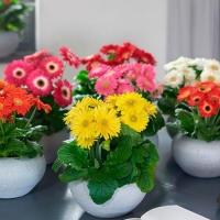 Лучшие натуральные удобрения для комнатных растений. Чем подкармливать домашние цветы?