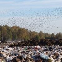 В Омской области районную администрацию обязали убрать свалку