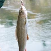 Рыбалка на сибирского хариуса