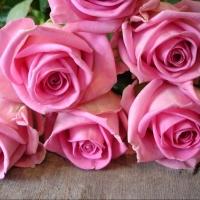 Импортные или отечественные розы? 5 отличий