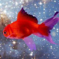 К чему снится рыба: толкуем правильно